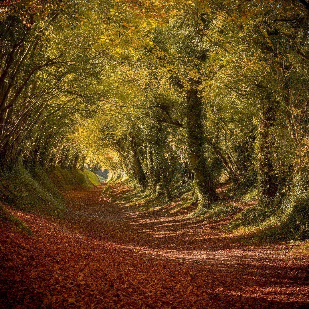Autumn tree tunnel at Halnaker Roman Road, Sussex